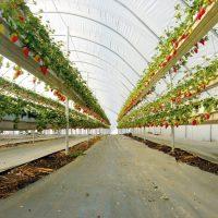 חקלאות וגינון, חקלאות הידרופונית